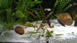Белые червячки. Растения в аквариуме. № 13