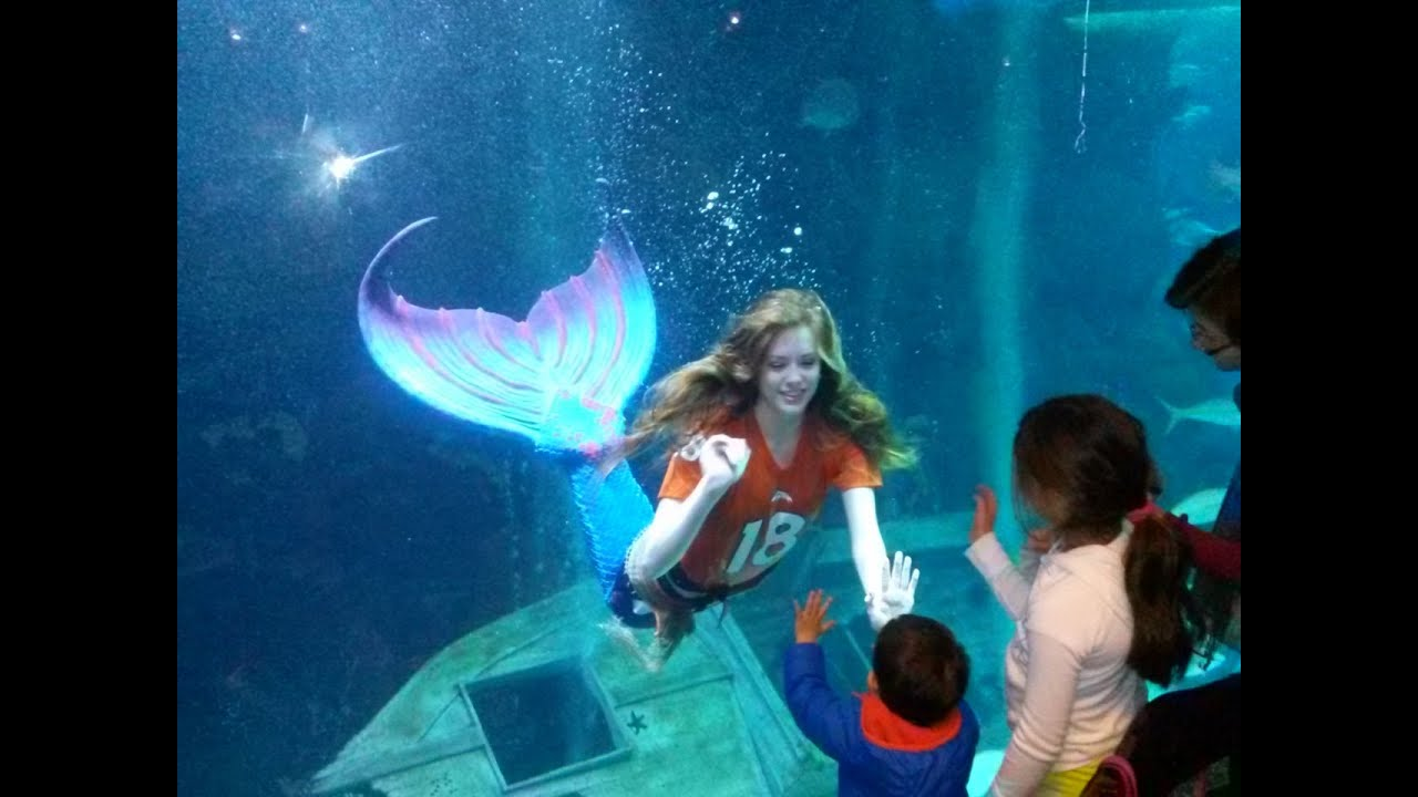 Denver Downtown Aquarium 1 12 14 Youtube