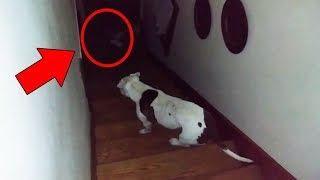Cats and Dogs That Saw Something Their Owners Couldn\'t See : ESP and the Supernatural