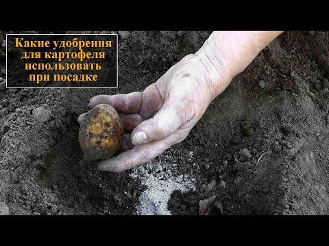 Вопрос: Можно ли для посадки картофеля применить только ростки картофеля?