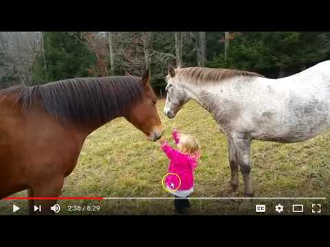 Discussing Kids Around Horses - Dangers & Considerations - Developing A Critical Eye