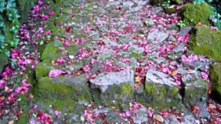 Roberto Carlos -as flores do jardim da nossa casa.