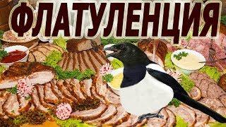 Приколы Вайн Скетч 😃 Птица сорока Fun video Bird Magpie