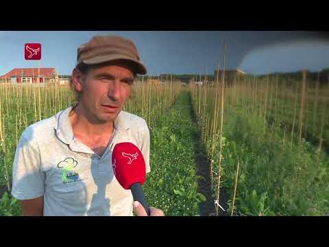 Fruitboominzameling door kweker Johan Smits
