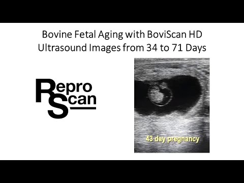 Bovine Ultrasound Images 34 to 71 days BoviScan HD