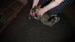 Жесть! Ставим укол кошке в темноте! Лечим антибиотиками!