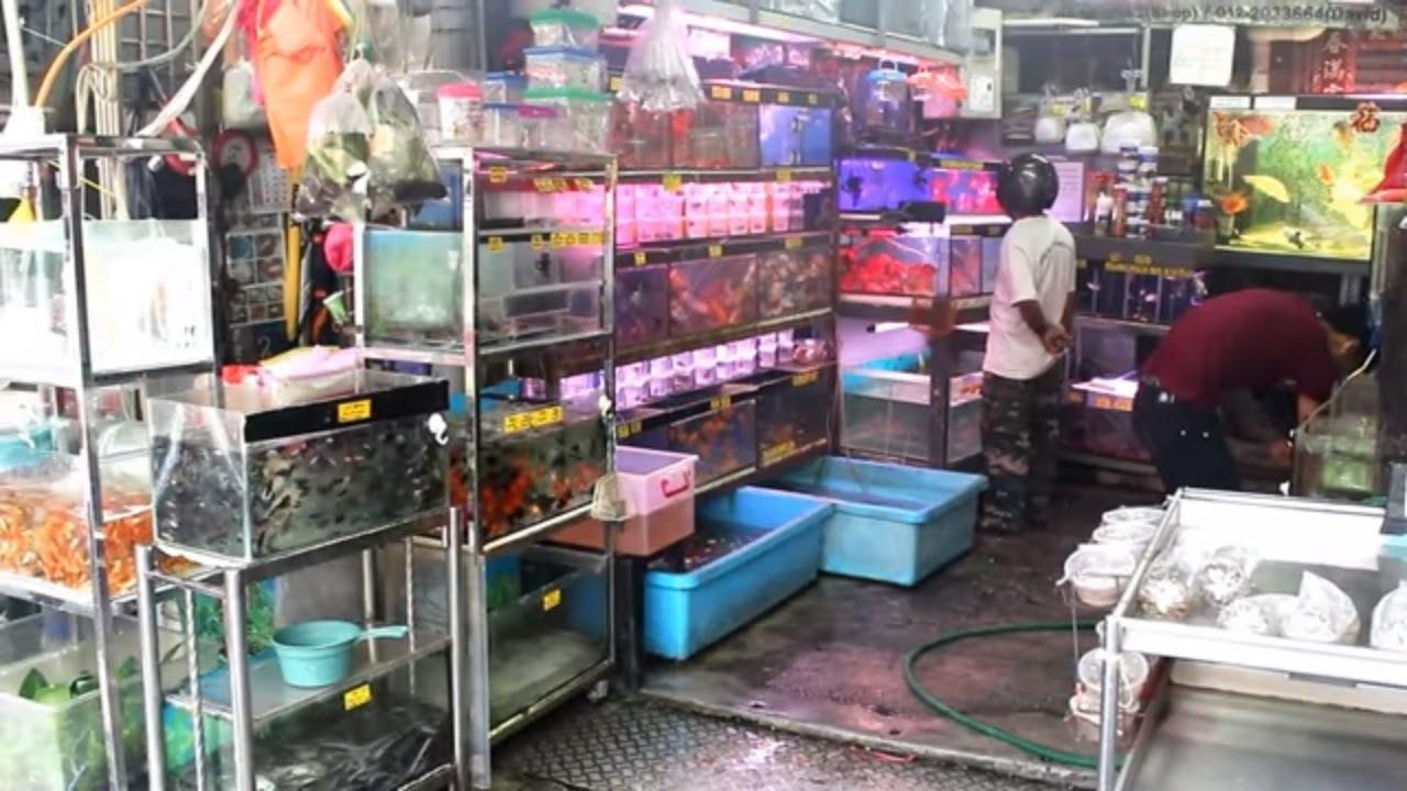 Aquarium Fish Market In Malaysia Kula Lumpur Klcc Youtube