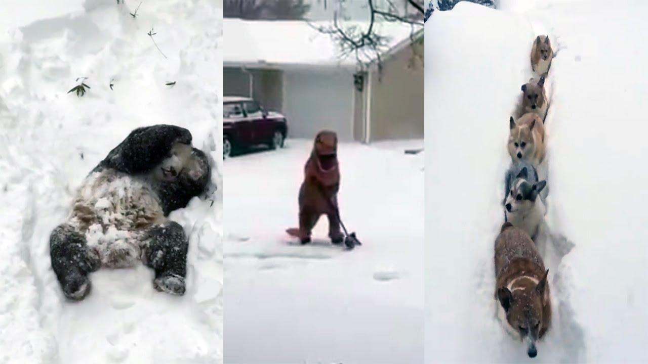 funny snow storm wallpaper - photo #24