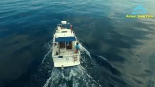Рыбалка на Средиземном море в Испании. Fishing in Spain. Компания Antaal Spain Tour.(Рыбалка на средиземном море в Испании Компания Antaal Spain Tour Интересная и разнообразная Испания на сайте:http://ww..., 2016-06-08T17:43:15.000Z)