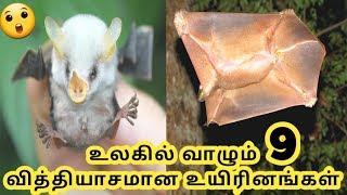 வித்தியாசமான உயிரினங்கள்  Unique Animals  Tamil Galatta News