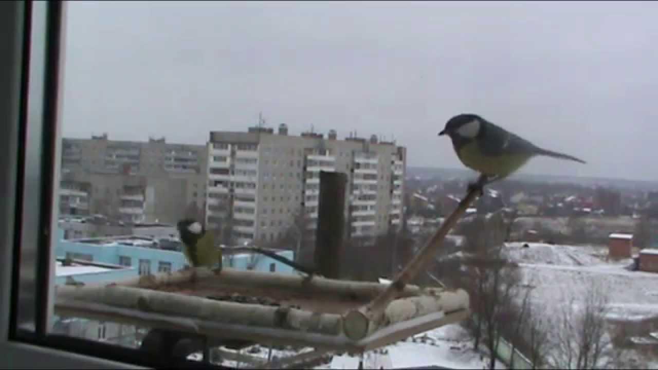 Как сделать кормушку для птиц на окно фото 414