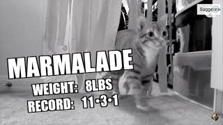The Best of Cole and Marmalade (Pt 2)