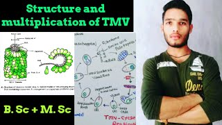 Structure and Replication of TMV