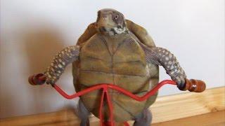 Funny tortoise compilation – Funny animal compilation
