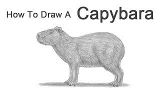 How to Draw a Capybara