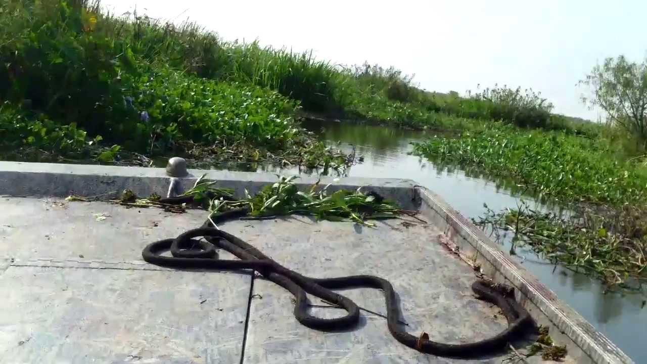 2013 alligator hunting south louisiana youtube for Buy louisiana fishing license online