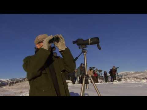 Yellowstone Safari Virtual Winter