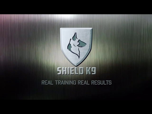 Aggressive German Shepherds x 2 - Shield K9