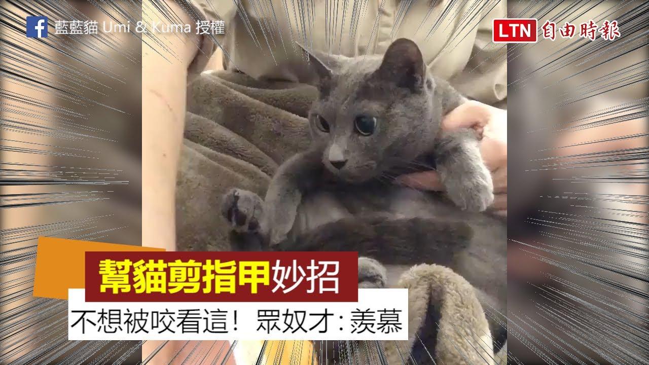 妙招!幫貓剪指甲不想被咬怎麼辦? 奴才教學用「這個」