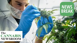 $300M Research Cannabis Cultivation Facility Coming to New Mexico