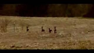 DISILLUSION GLORIA Trailer 1