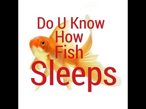 FISH SLEEPING | DO YOU KNOW IF GOLDFISH SLEEP
