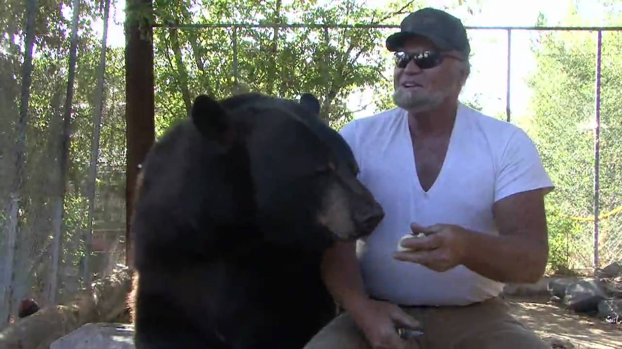 Henry the bear mitchell oregon youtube - The urban treehouse the wonder in the heart of berlin ...