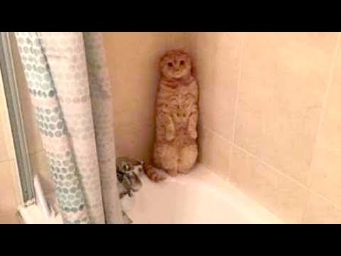 Thumbnail: This will TEACH YOU WHAT A GOOD LAUGH IS - FUNNY ANIMAL compilation