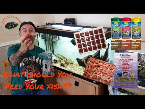 Feeding Freshwater Tropical Fish: What Should You Feed Your Fish, A Feeding Tutorial.