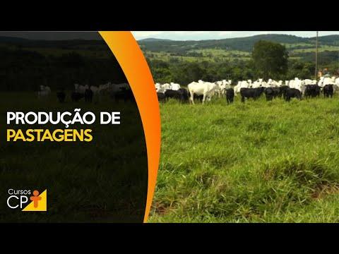 Clique e veja o vídeo Como Medir a Produção da Pastagem