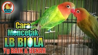 Video Cara MENCETAK Lovebird BIOLA, Dengan Cara Silang SPLIT + EUWING DARK VIOLET download MP3, 3GP, MP4, WEBM, AVI, FLV Juli 2018