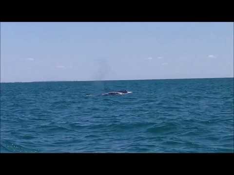 Sortie baleines et dauphins à Majunga - Madagascar.