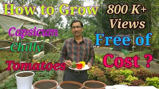 How to grow Tomatoes , Capsicum and Chilli in container at Home, Totally at Free of Cost.