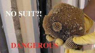 Removing a yellow jacket wasp nest with NO SUIT