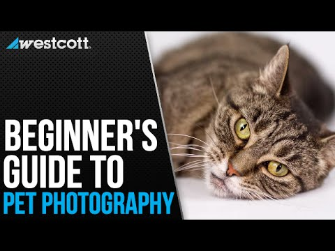 pet-photography-tips-and-techniques