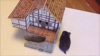 Our new hamster! (Наш новый хомяк!)