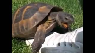 Turtle f*cking shoe