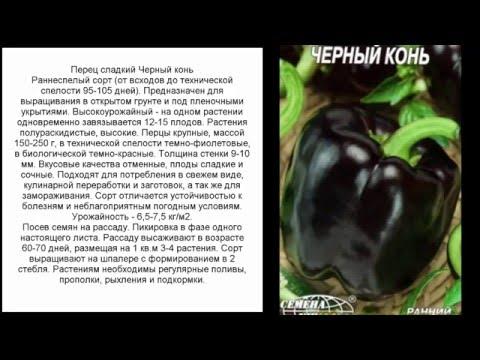 Перец сладкий Черный конь уход выращивание агротехника отзывы
