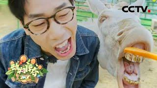 《动物传奇》 20201227 最美旅程|CCTV综艺 - YouTube
