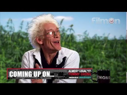 TOMMY CHONG interviews BILL LEVIN on Almost Legal