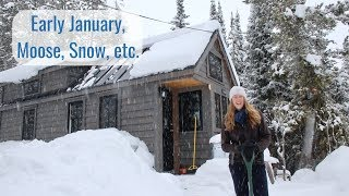 Life in a Tiny House called Fy Nyth - Beginning of January