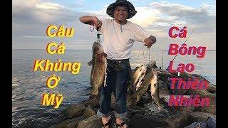 Cá Khủng Ở Biển Mỹ, Quá Nhiều Cá Bông Lao Thiên Nhiên