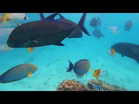 Family Holidays on Rarotonga, Cook Islands, Oct 2018