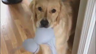 Самое милое видео с котиками Забавные собаки Без кота и жизнь не та