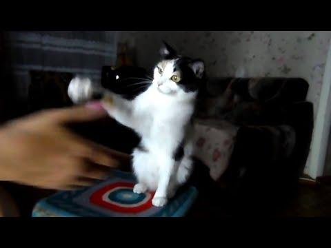 Смешное видео про животных 2016 смотреть онлайн