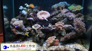 【有LED水族燈具 的海底世界】 - 實際安裝 的水族箱照片分享 - 海水 FO/SPS/LPS 魚缸