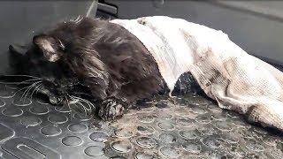 В луже нашли полуживого замерзающего кота Нужно спасать animal shelter rescues cat