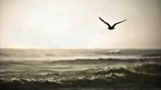 Ei eksy taivaan lintukaan -Kari Tapio