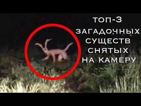 3 Необъяснимых, загадочных Существ снятых на камеру | Чупакабра