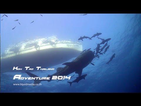 Adventure Koh Tao best of 2014 - HD Underwater Videography Training - Koh Tao - Thailand